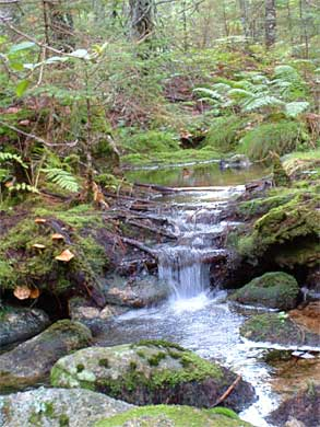forest_brook_293390