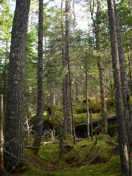 The 261 hectares of land features mature spruce, pine and a shade-tolerant hardwood forest.  It is located in an area of the province with very little protected land.