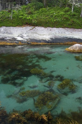 Shelter Cove Pools Photos by Nova Scotia Nature Trust