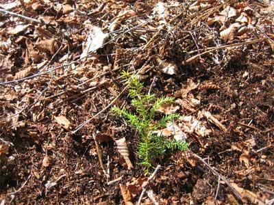 planted_chris_400300