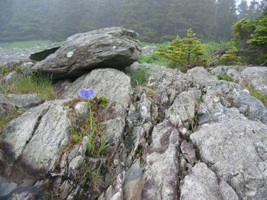 Shelter Cove rocks by Martin Willison, Nova Scotia Nature Trust
