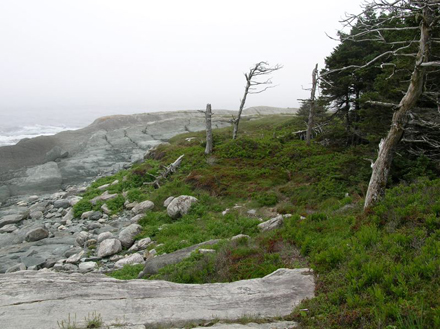 Rocky shore and ghost trees, by Denise Mcdonald, Nova Scotia Nature Trust
