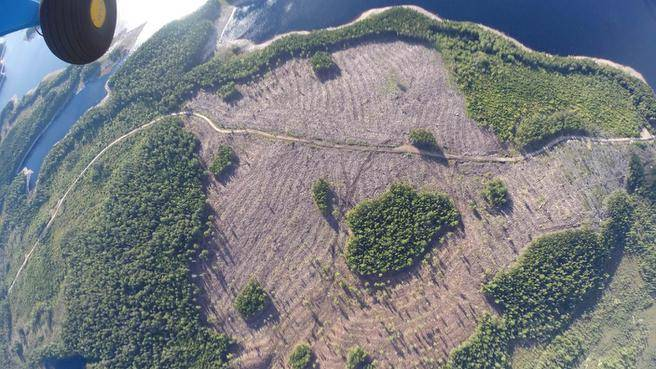 clearcutting nova Scotia