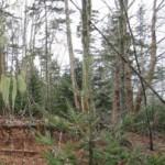 clay_island_trees202300