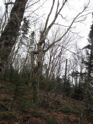 clay_island_trees_B300400