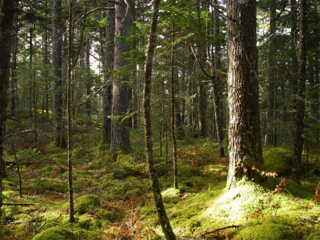 long_lake_forest_800